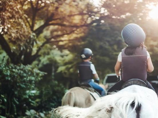 Tödlicher Unfall in Yorkshire: Horror-Sturz! Mädchen (2) stürzt von Pony - tot