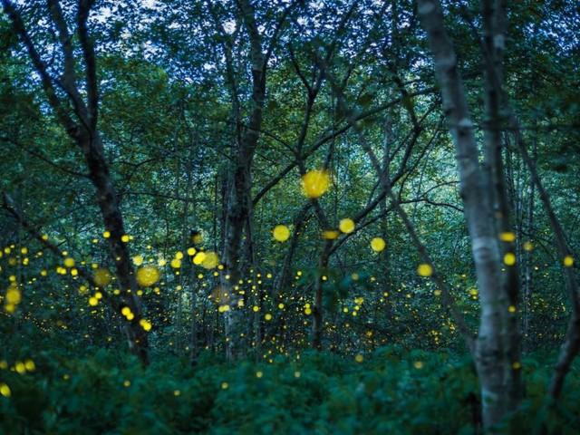 Glühwürmchen: Ein Leben voller Licht und Liebe