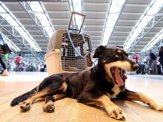 Finnland: Am Flughafen von Helsinki gibt es jetzt neue Toiletten – für Haustiere