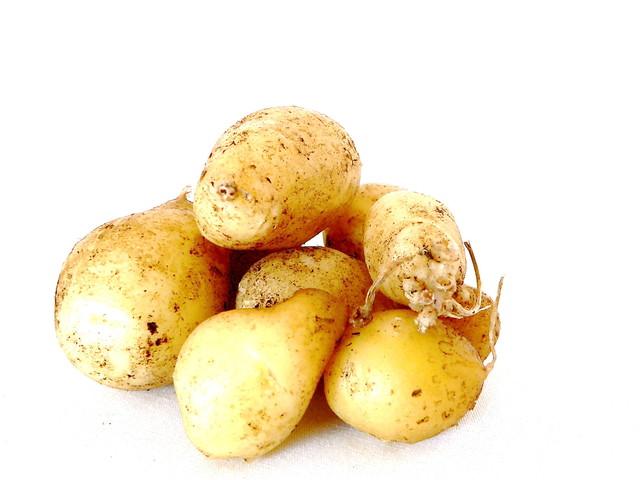 Auf dem Feld Kartoffeln ernten