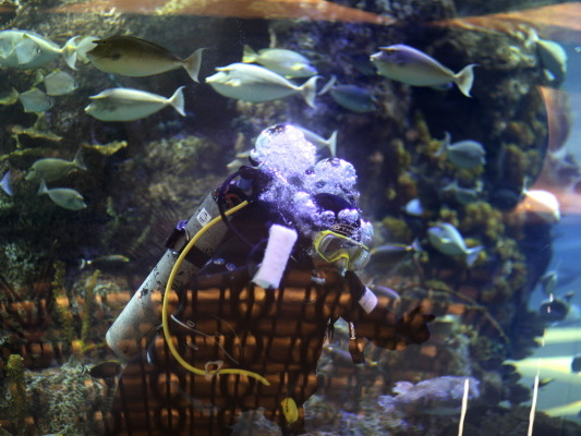 Bild des Tages: Ein Putz-Taucher im Aquarium.