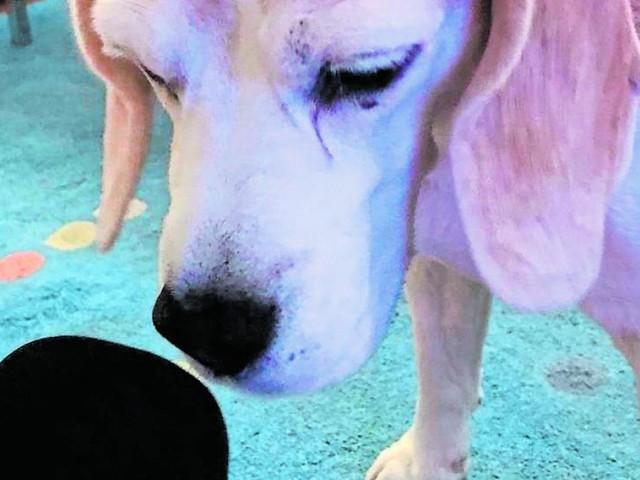 KURIER-Hund als Podcast-Gast