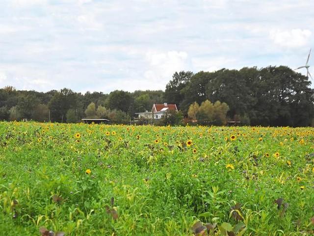 Münsterland: So überwintert die Honigbiene