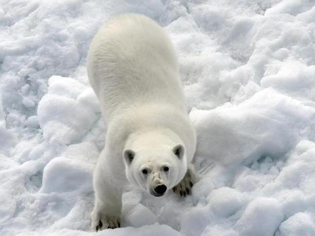 """Das sechste """"Massenaussterben"""" - UN-Bericht warnt: Eine Million Tier- und Pflanzenarten vom Aussterben bedroht"""