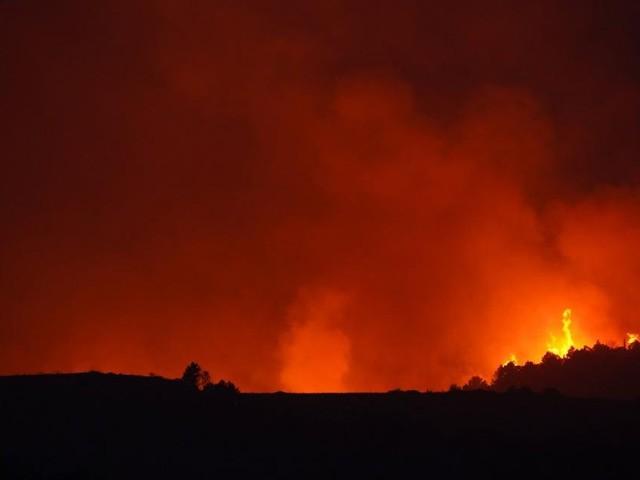 Schon wieder: Brandstiftung in Pinienwald bei Bibione