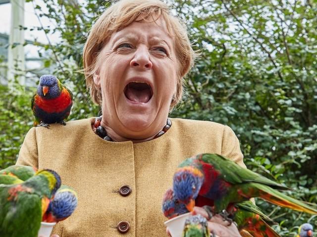 """Abschiedsbesuch im Wahlkreis - Merkels Besuch im Vogelpark: Nur beim Uhu sagt sie """"Ne, ne"""""""