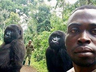 Seltenes Foto: Gorillas posieren auf Selfie aufrecht stehend mit besonderem Mann