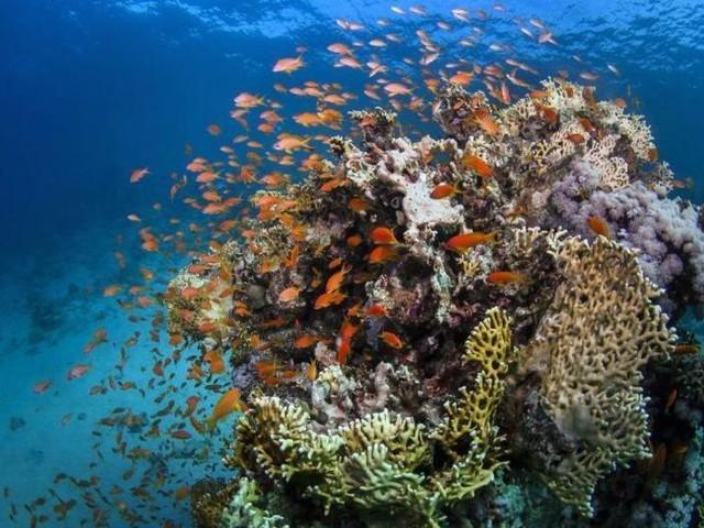 Great Barrier Reef nicht als «bedrohtes» Welterbe eingestuft