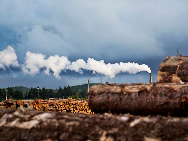 Höchstpreise schrecken Käufer ab: US-Holzpreis bricht in Rekordtempo ein