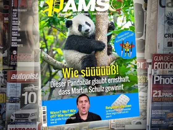 Morgen in PamS: Wie süüüüüß! Dieser Pandabär glaubt ernsthaft, dass Martin Schulz gewinnt