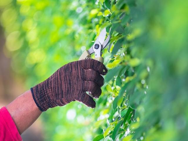 Sichtschutz für den Garten: Mit diesen Tipps gelingt Ihnen die perfekte Hecke