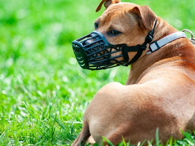 Stadt Wien beschließt strengere Gesetze für Hunde-Haltung