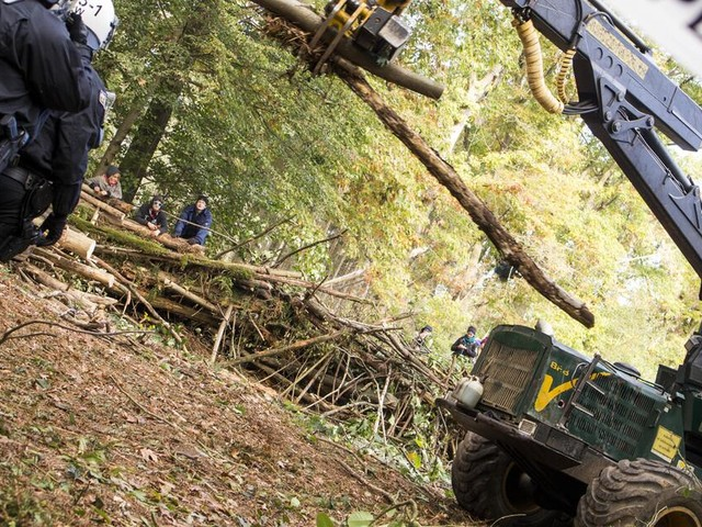Hambacher Forst: OVG Münster verfügt Rodungsstopp