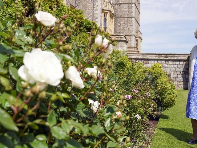 Prinz Philip wäre 100 geworden: Queen pflanzt Rose mit seinem Namen