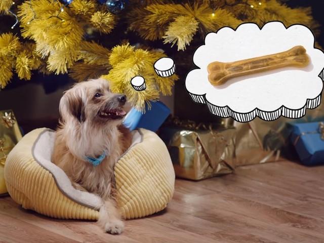 Merry Woofmas: Ein Film für Hunde