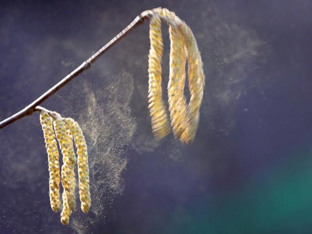 Pollenflug: So schlimm war die Heuschnupfen-Saison lange nicht mehr