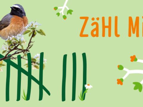 App-Mitmachaktion startet: Nabu ruft zum Zählen von Gartenvögeln auf