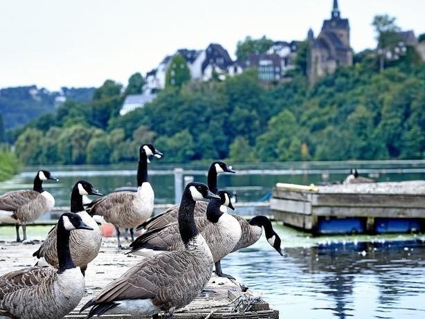 Freizeit in Hagen: Ruhrseen sind nach der Flut wieder nutzbar