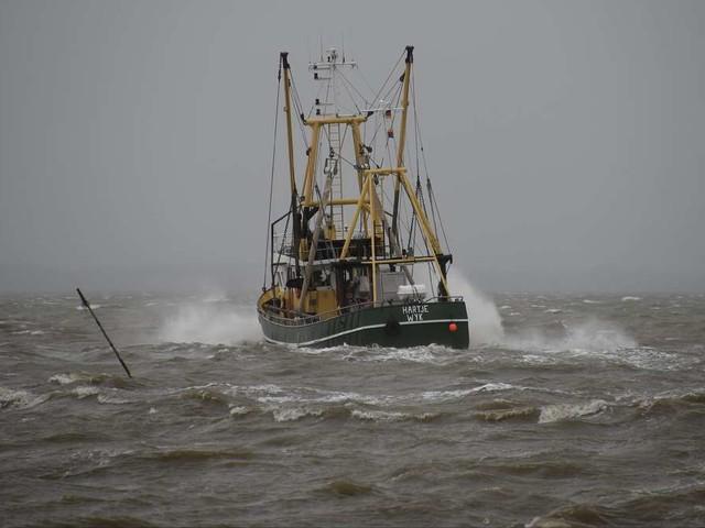 Kleinem Fischerboot gelingt Mega-Fang: Zwölf-Meter-Koloss verfängt sich in Netz