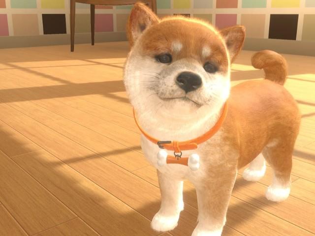 Little Friends: Dogs & Cats - Haustier-Simulator für Switch veröffentlicht