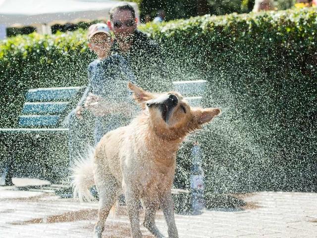 Hitze-Gefahr für Hunde und Katzen: So schützen Sie Ihre Vierbeiner