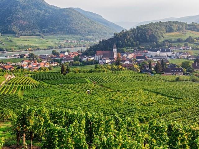 Österreichs Winzer erwarten gute Weinernte