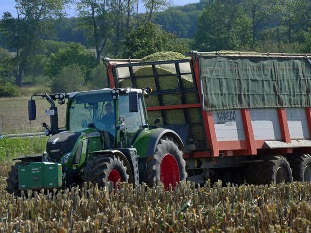 Jeder zweite Landwirt bezieht Einkommen aus zweitem Standbein