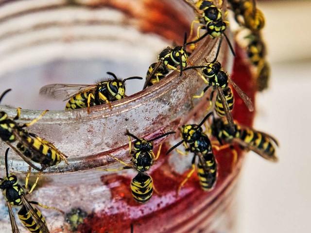 Tipps gegen Wespen: Was tun gegen Wespen im Sommer?