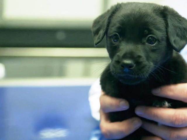 SPIEGEL TV-Reportage: Wenn Hund und Katze in Not sind - Vernachlässigt, misshandelt, verramscht
