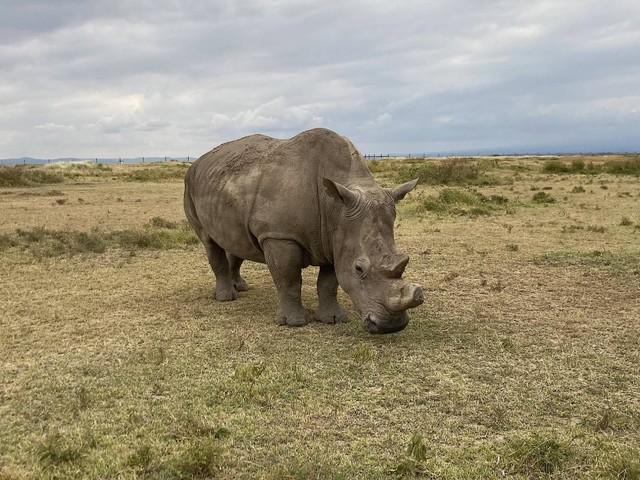 Südafrika: Nashorn-Wilderei legt wieder zu