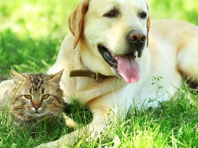 Hitze-Gefahr für Hunde und Katzen: Das bietet den Vierbeinern Schutz