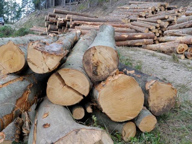 """Holz fehlt: """"Firmen könnten im Herbst stillstehen"""""""