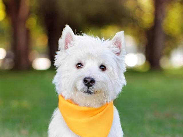 """Tiercoach: Gelbe Masche am Hund zeigt an: """"Bitte Abstand halten"""""""