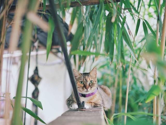 Schneller Sichtschutz im Garten – diese drei Hecken machen es möglich