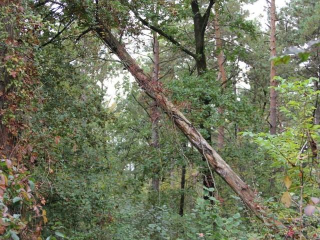 Nach Mendlingtal-Unglück: Einige Waldwege werden gesperrt