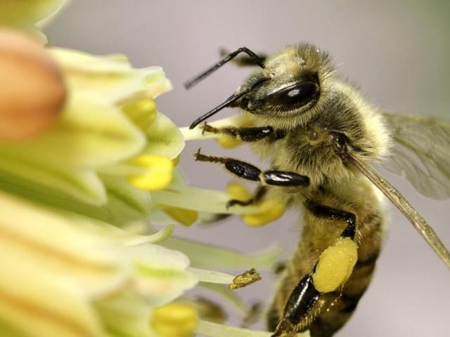 Tag der Bienen: Welchen Garten die fleißigen Insekten lieben