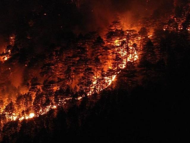 Waldbrand im Rax-Gebiet: Sorge um Wind und tagelanger Einsatz