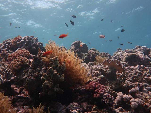 Sterbende Korallen: Setzt Unesco Australiens Great Barrier Reef auf die Rote Liste?