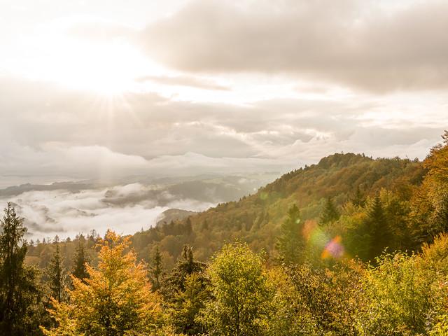 Sihlwald – Albishorn – Türlersee: wo Zürich im Herbst am schönsten ist