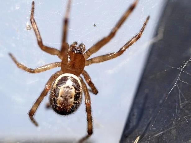 Tier: Vermeintliche Riesen-Spinne sorgt für Polizeieinsatz