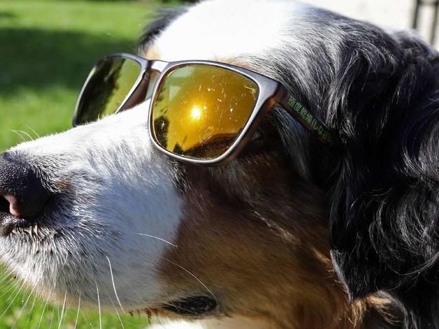 Hundstage: Das sagt das Wetter vom 23. Juli bis 23. August aus