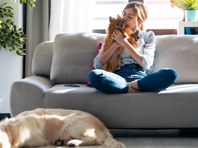 Auch Hunde kennen das Gefühl von Eifersucht