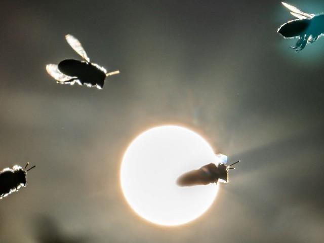 """""""Rettet die Bienen"""": Landwirte müssen Teil der Lösung sein"""