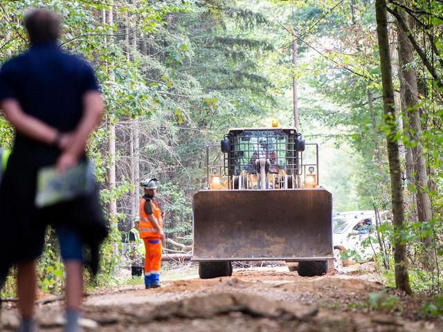 Gericht verhängt Rodungsstopp im Hambacher Forst