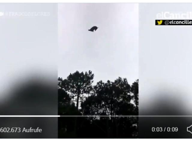 Unbekannte werfen totes Schwein aus Hubschrauber in Pool von Millionär - dieser reagiert geschmacklos