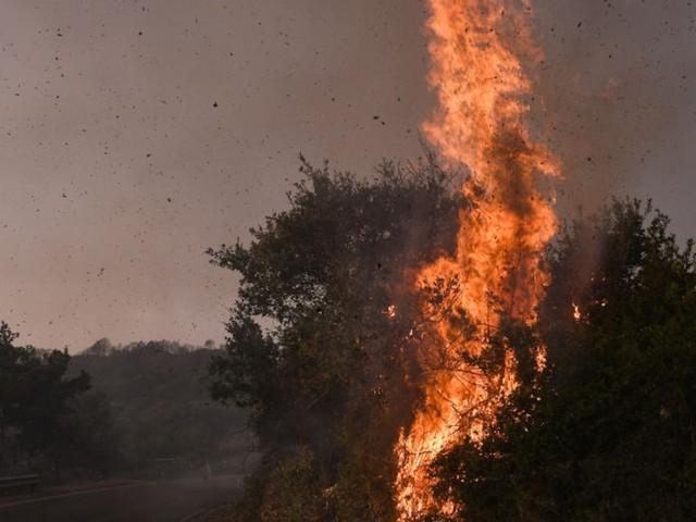 Urlaubsinsel in Flammen - Mächtiges Feuer wütet auf Sardinien - bereits unzählige Tiere und 20.000 Hektar Land vernichtet