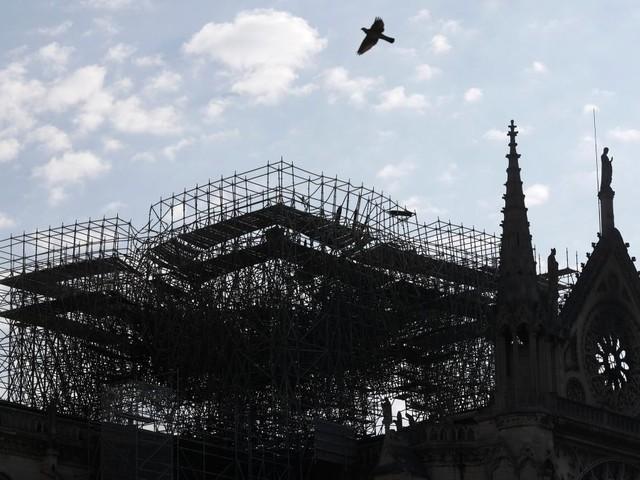 Notre-Dames Imker erlebt ein kleines Wunder
