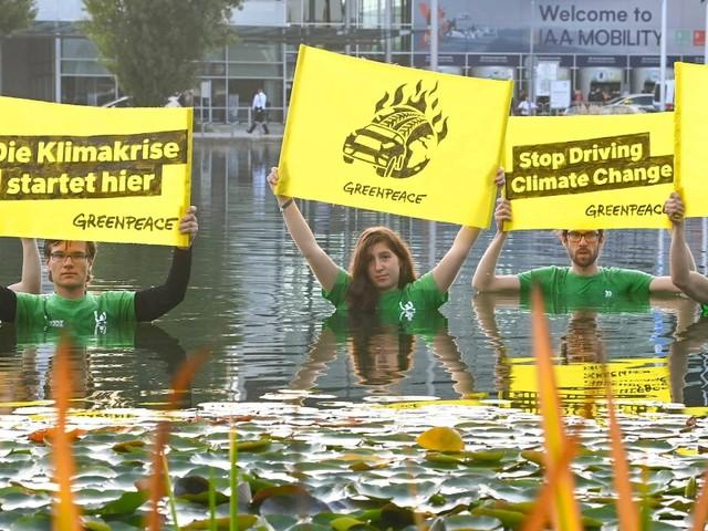 Greenpeace wird 50 Jahre alt