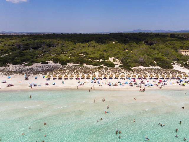 Es Trenc: Wie gefährlich ist das Seegras an diesem beliebten Mallorca-Strand?