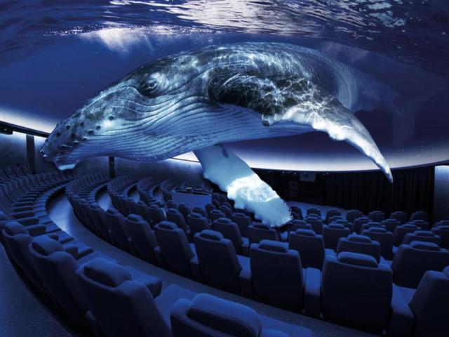 Virtuelles Aquarium: Mallorca hat eine neue Attraktion